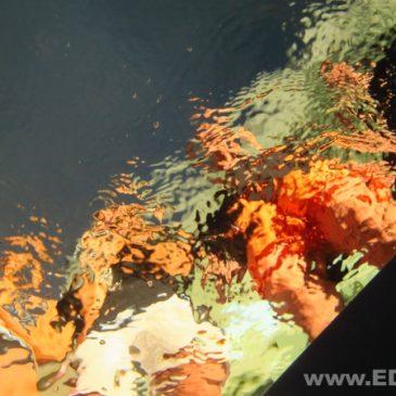20 lipca 2011 – Pokazy nurkowania na basenie AQUA w Bielsku-Białej