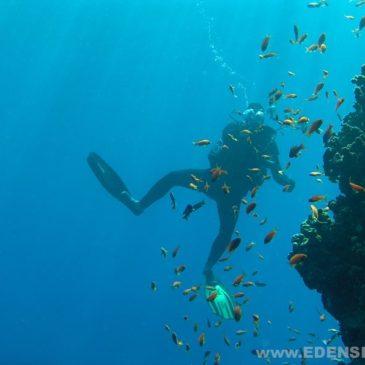 WAŻNE! Sharm El Sheikh z EdenSport
