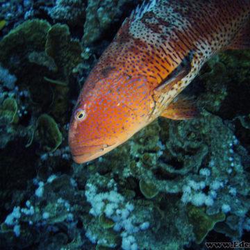 Marsa Alam – Dzień 6 i nurkowanie nocne
