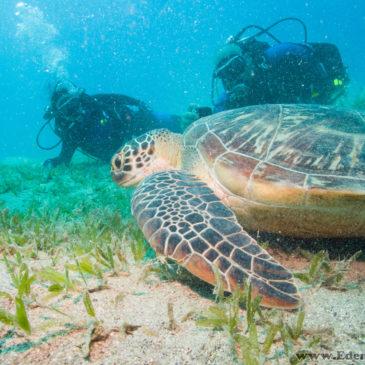 28.03.2019 – Zostań płetwonurkiem i zobacz podwodny świat na własne oczy!