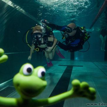 1.10.2018 – Zdjęcia z pokazów nurkowania na basenie AQUA.