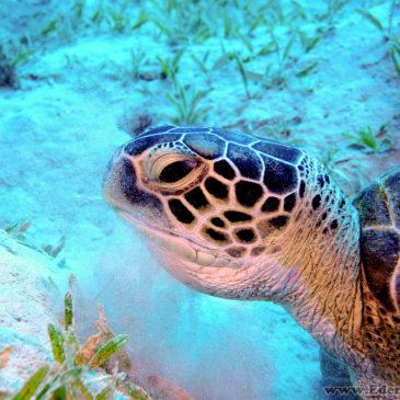 Marsa Alam – Dzień 2 – Żółwie! :)