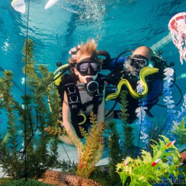21.11.2018 – Zdjęcia z pokazów nurkowania na basenie Goczuś