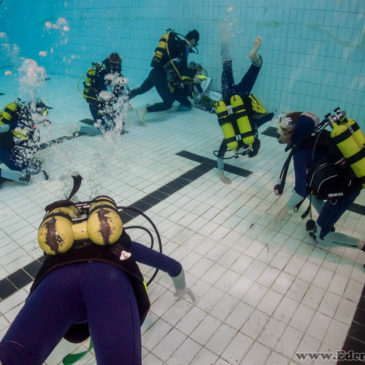 19.05.2019 – Zajęcia basenowe Junior OWD oraz kursu zaawansowanego