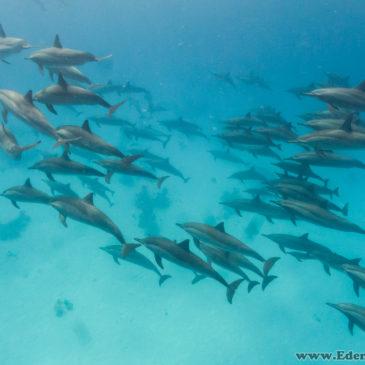 Nurkowe wakacje Marsa Alam – dzień 2 – delfiny i rekin! :D