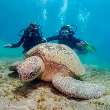 Nurkowe wakacje – El Quseir – Nie publikowane wcześniej żółwie! :)