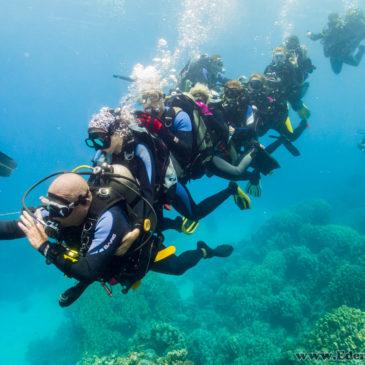 Podstawowy kurs nurkowania – czy warto?