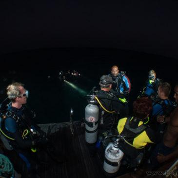 Żółw spotkany na nocnym nurkowaniu w morzu czerwonym