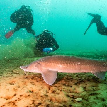 22.11.2020 – Szkolenie nurkowania w suchym skafandrze