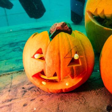 1.11.2020 – Halloweenowe zakończenie kursu podstawowego