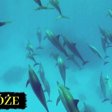 Podwodna przygoda z EdenSport